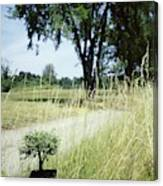 A Bonsai Tree In A Hayfield Canvas Print