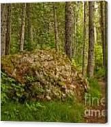 A Boulder In The Rainforest Canvas Print