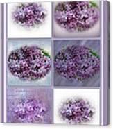 A Bouquet Of Lilacs Canvas Print