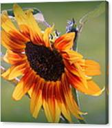 A Bow To Mother Nature Canvas Print