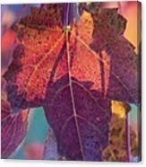 A Breath Of Autumn Canvas Print