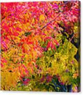 Autumn In Yountville, California Canvas Print