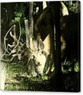 A Buck Deer Grazes Canvas Print