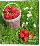 A Bucket Of Strawberries Canvas Print