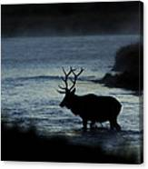 A Bull Elk Crosses The Madison In The Early Morning  Canvas Print