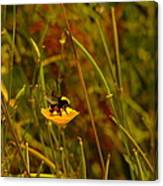 A Bumble In A Cup Canvas Print