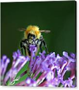 A Bumblebee On Lilac Canvas Print