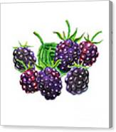 A Bunch Of Blackberries Canvas Print