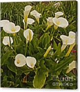 A Bunch Of Easter Sunday Easter Lillies Canvas Print