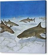 A Bushel Of Lemon Sharks Canvas Print