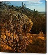 A Cactus In The Sandia Mountains Canvas Print