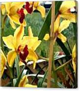 A Cage Of Canary Cymbidiums Canvas Print