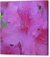 A Cape Town Flower II Canvas Print