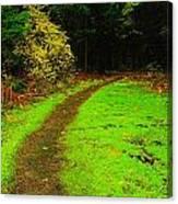 A Carpted Path Canvas Print