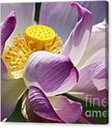 A Casual Water Lily Canvas Print