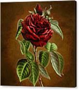 A Chocolate Beauty Canvas Print