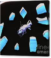 A Clockwork Blue Canvas Print