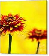 A Colorful Pair Canvas Print