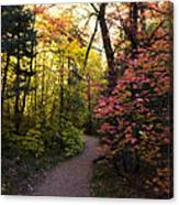 A Colorful Path  Canvas Print
