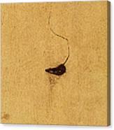 A Concrete Life Canvas Print