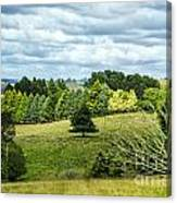 A Copse Of Trees Canvas Print