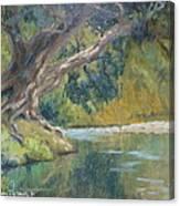 A Coramandel Stream Canvas Print