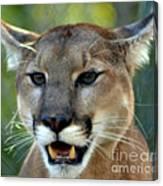 A Cougars Face Canvas Print