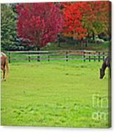 A Couple Horses And Beautiful Autumn Trees Canvas Print