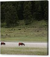 A Couple Of Horses Standing Canvas Print