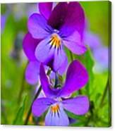 A Couple Of Pansies Canvas Print