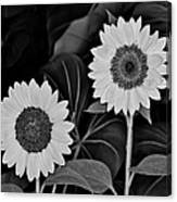 A Couple Of Sunflowers. Canvas Print