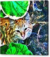 A Curious Cat Canvas Print