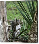 A Curious Squirrel Canvas Print