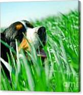A Cute Dog In The Grass Canvas Print