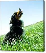 A Cute Dog On The Field Canvas Print
