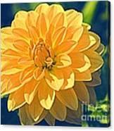A Dahlia In Autumn Canvas Print