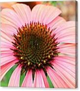 A Daisy For You Canvas Print