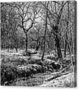 A Dash Of Snow Canvas Print