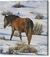 A Day In The Life Of  A Wild Horse  Canvas Print