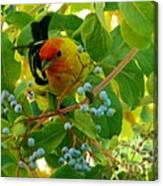 A Day With Mr. Tanager 3 Canvas Print