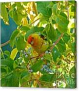 A Day With Mr. Tanager 5 Canvas Print