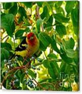 A Day With Mr. Tanager 9 Canvas Print