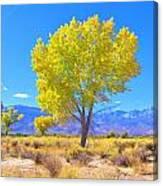 A Desert Autumn Canvas Print