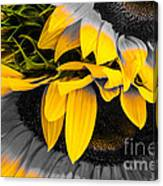 A Different Kind Of Sunflower Canvas Print