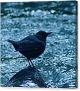 A Dipper On A Rock Canvas Print