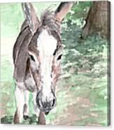 A Donkey Day Canvas Print