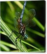 A Dragonfly Canvas Print