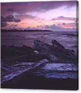 A Driftwood Morning Canvas Print