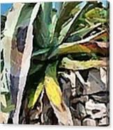 A Dry Agava Canvas Print