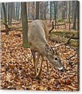 A Eight Point Buck 1261 Canvas Print